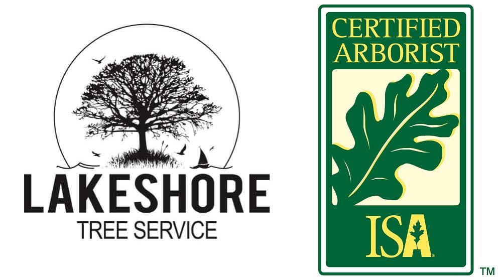 Lakeshore-tree-service.jpg